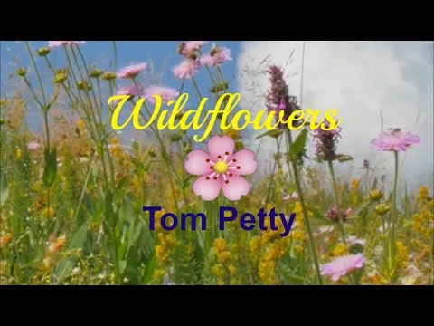 Tom Petty - Wildflowers Lyrics