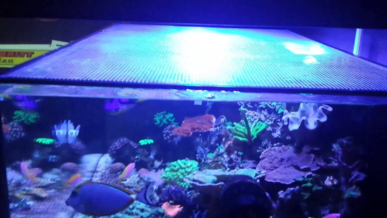 Rimless top cover build from brs clear mesh window screen for Fish tank top cover