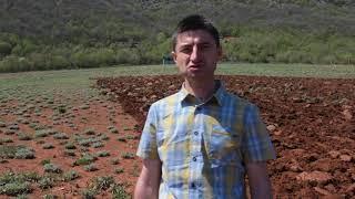 Мурсалски чай - село Ляски - Стефан Спасов - пирински чай