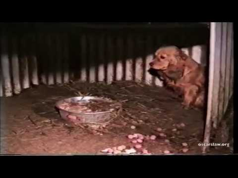 puppy factories Masked by the adorable faces of potential pets, puppy mills are essentially factories motivated by profit.