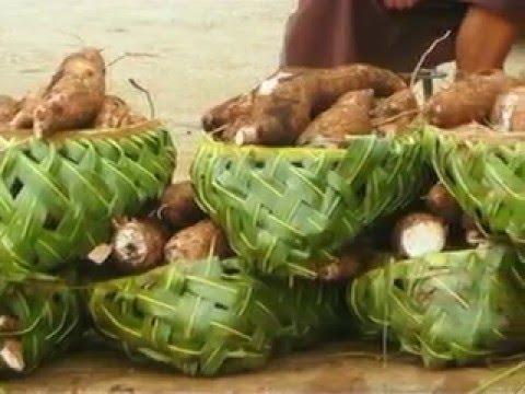 PIGGAREP - Tonga