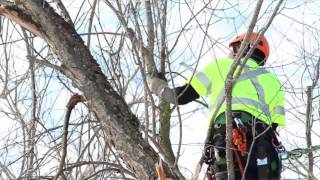 Advanced Tree Care - What it means to be an arborist