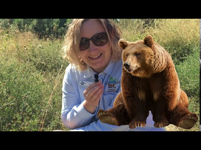 Plant ID & Bear Safety with WildSafe BC!
