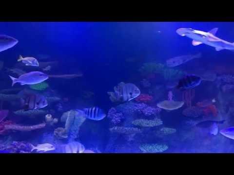 Via Aquarium Rotterdam NY Tunnel Tank