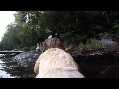 GoPro Fetch Swimming Dog Demo