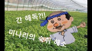 1분 초간단 건강밥상?! [돼지감자미나리겨자채] (#천…