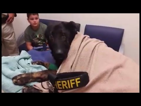Dying K-9 Officer Gets Heartbreaking Last Call Honor By Police Department