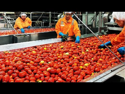 Tomato Processing Technology - How Tomato Ketchup Is Made - Ketchup Tomato Factory
