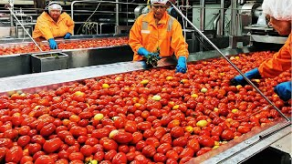 Gambar cover Beautiful Tomato Processing Technology Automatic Tomato Line From Seed to Canned