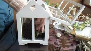 Jak nauczyć się zrobić Las w szkle-mini szklarnia?DIY