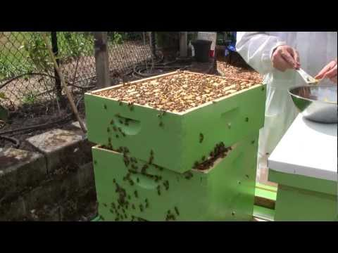 Bee Vlog #66 - September 8, 2012 - Hive mapping & escape boards