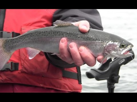 Winter Trolling Tactics For Trout In Washington