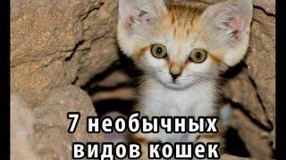 7 необычных видов кошек, о которых вы не знали