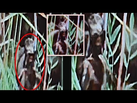 5 STRANGEST Sightings Of ALIEN BEINGS Spotted On Camera In The Middle Of THE WOODS!
