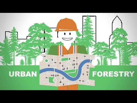 Forest Fast Break -  Renewable Resources