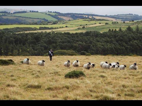Organic Lamb and Mutton | Abel & Cole