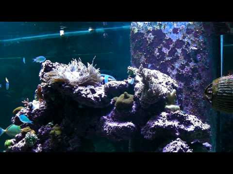 Project Natural - Mr Aqua Chic 11.4 Rimless w/ Kessil A80 Tuna Blue - Day 12 - Filter/Pump Upgradesиз YouTube · Длительность: 6 мин15 с