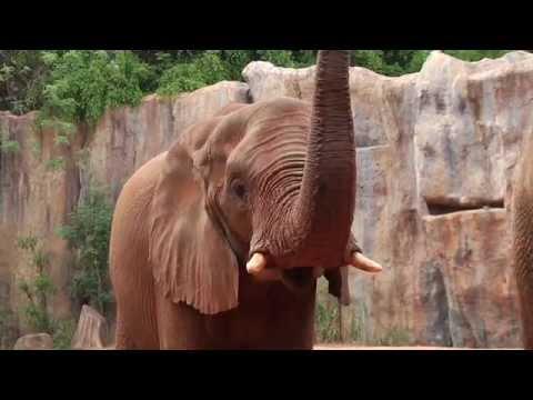 Inside Zoo : ช้างแอฟริกา