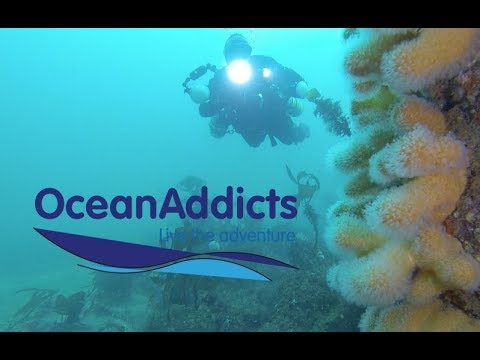Diving with Oceanaddicts