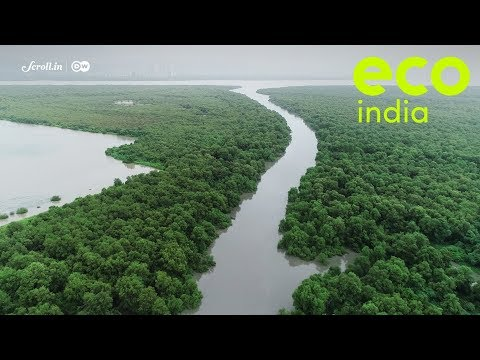How fishermen from an urban fishing village are conserving Mumbai's mangrove wetlands