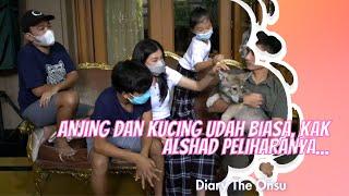 ANJING DAN KUCING UDAH BIASA, KAK ALSHAD PELIHARANYA...   DIARY THE ONSU (20/12/20) P1