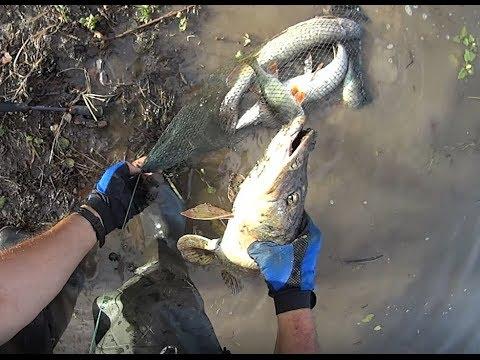 Рыбалка на Волге 2019 Супер день.Клюёт на всё. Енотаевский район