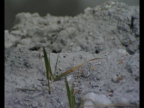 """Ядовитые отходы готовятся ликвидировать в Усолье-Сибирском, """"Вести-Иркутск"""""""