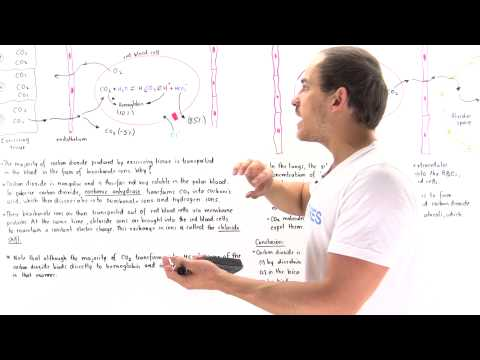 Transport of Carbon Dioxide and Chloride Shift