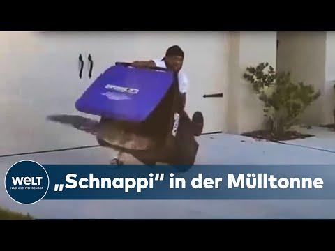 SPEKTAKULÄRER FANG: Eine Alligator, ein Mann und eine Mülltonne