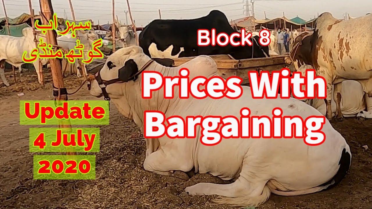 Cattle Prices With Bargaining - Sohrab Goth Maweshi Mandi