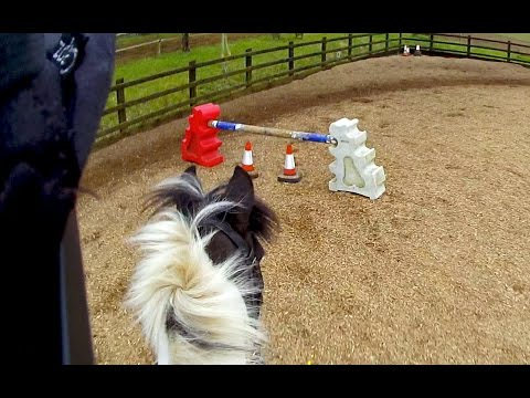 Dog-Leg (Flatwork/Jumping) - Helmet Cam