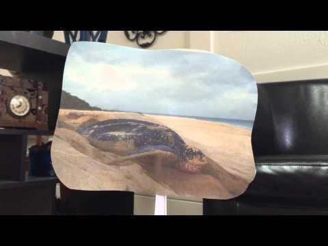 Leatherback Sea Turtle Presentation