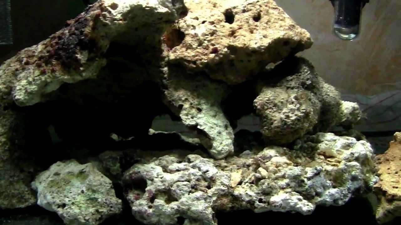 Plafoniere Led Per Nanoreef : Il mio nano reef litri mese di vita in attesa dei led youtube