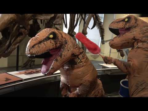T-rex cleaning duo!