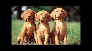 オンラインで犬のショーに従ってください: ➤インスタンス図:https://w...