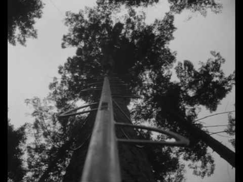 Vroege Vogels: Op de fiets de boom in