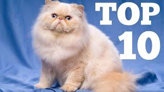 Top 10 Fluffiest Cat Breeds