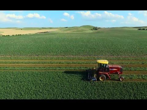 Alfalfa Swathing & Baling (LaRosh Farm)