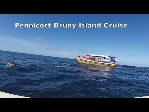 Bruny Island Tour - Hobart Tasmania 2015 Seals Dolphins