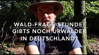 Gibts noch Urwälder in Deutschland? Fragestunde