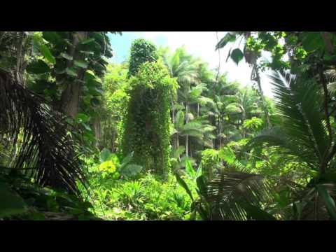 BRAZILIAN JUNGLE | 10hr White Noise - relaxing meditation rainforest sleep