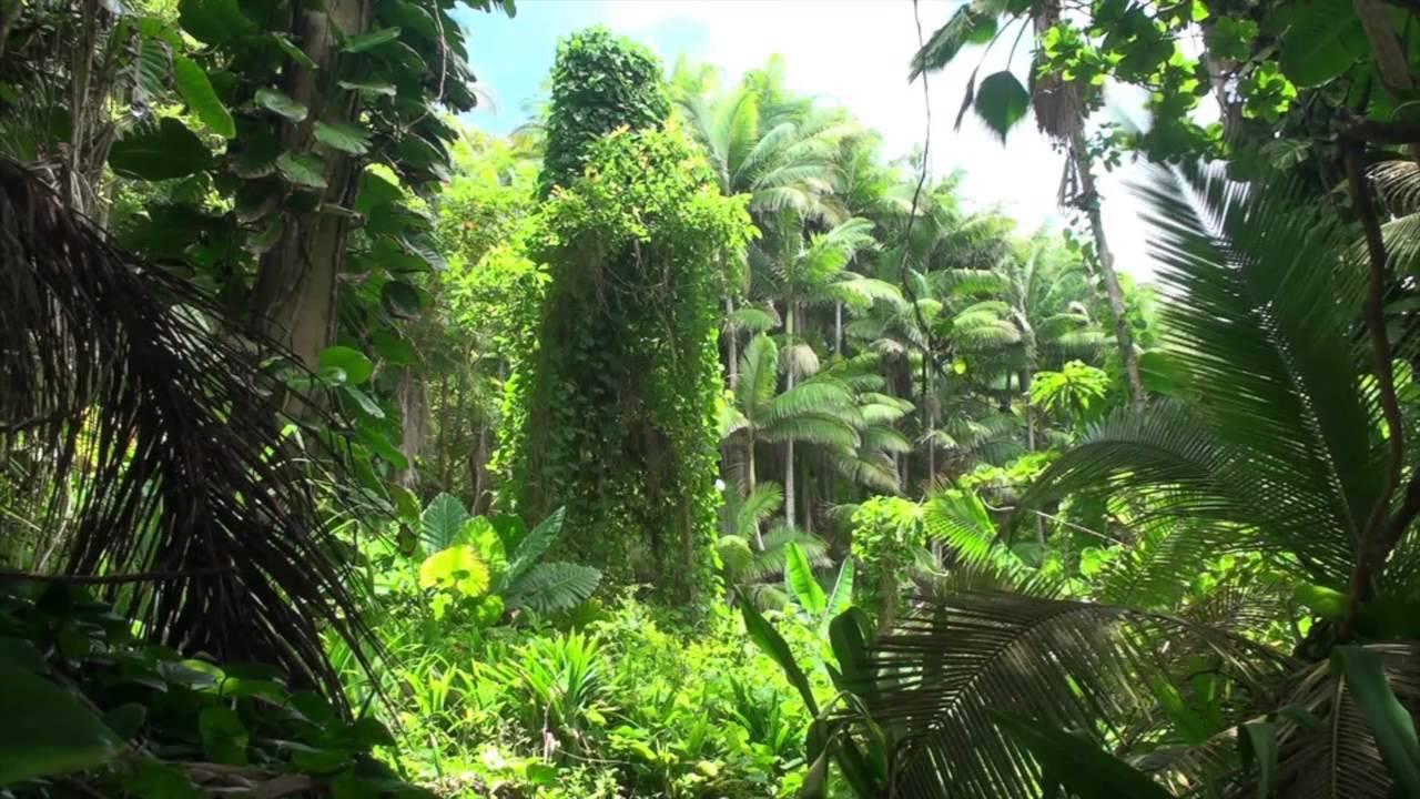 Hawaii Hd Wallpaper 1920x1080 Brazilian Jungle 10hr White Noise Relaxing Meditation