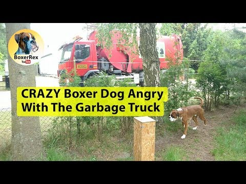 CRAZY Boxer Dog Angry With The Garbage Truck