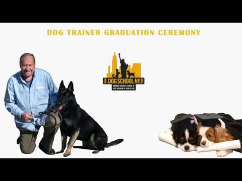 master dog trainer certification - anthony jerone's school of dog ...