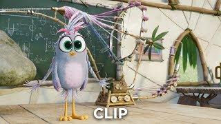 "ANGRY BIRDS 2: DER FILM - Clip ""Silver"" - Ab 19.9.19 im Kino!"