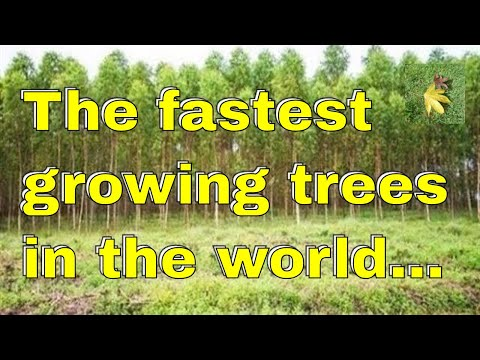 The fastest growing trees in the world...but...!
