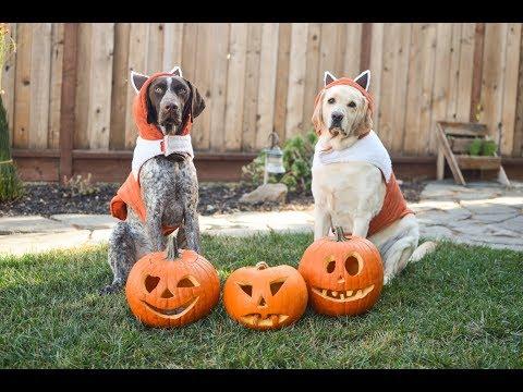 Dog Halloween Costumes/ Pet Parade/ Trick or Treat