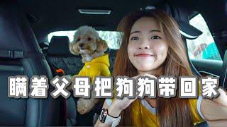终于把养大的狗狗带回家给爸妈看 一开始以为他们无法接受 Vlog#23