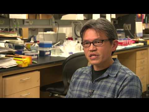 Duke University Medical Center, Dept of Cell Biology - Tissue Regeneration