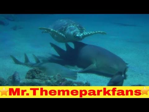 Diergaarde Blijdorp part 1/4 aquarium Oceanium ontdekken. 😁